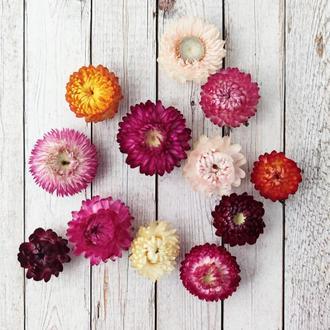 Цветы гелихризума (бессмертника) 10 шт. Микс