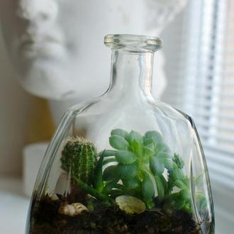Ботл-флораріум, флораріум в пляшці