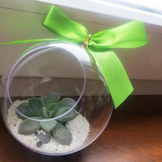 Ялинкові іграшки з живими рослинами
