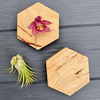 Набір настінних кашпо для повітряних рослин (тілландсія) І Настінний тримач для тілландсії