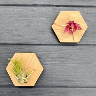 Набір настінних кашпо для повітряних рослин (тілландсія) І Настінний тримач для тіландсії