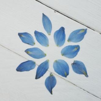 Лепестки цветов синие.