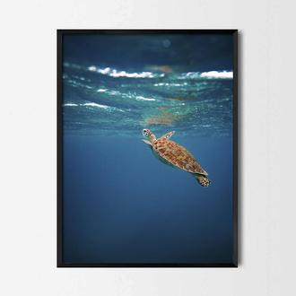 Фотопостер Черепаха под водой