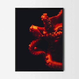 Фотопостер Красный осьминог