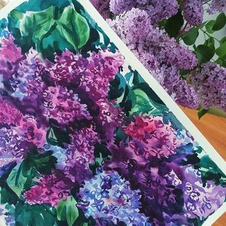 Фиолетовая сирень, картина акварелью