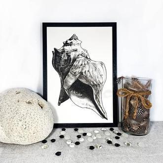 Морские ракушки, графика