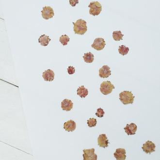 Маленькі бутони квітів плоскі.