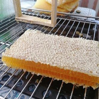 Сотовый мёд ( натуральный, лесной) 2021