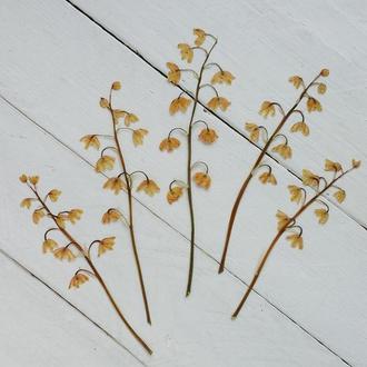 Гілочки з квітами конвалії.