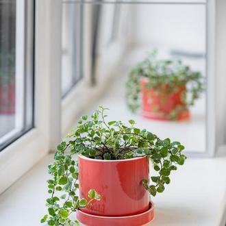 Керамічний горщик для рослин Mini Plant 9х11,5см Циліндр Кораловий
