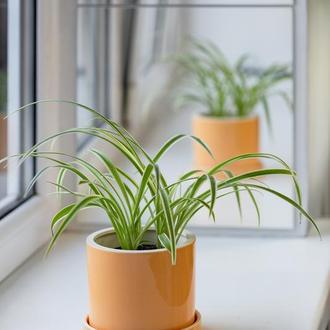 Керамічний горщик для рослин Mini Plant 9х11,5см Циліндр Жовтий