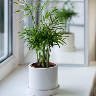 Керамический горшок для растений Mini Plant 9х11,5см Цилиндр Белый