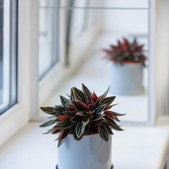 Керамічний горщик для рослин Mini Plant 9х11,5см Циліндр Сірий
