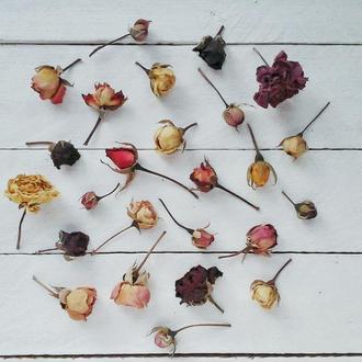 Розы засушенные. Сухоцвет.