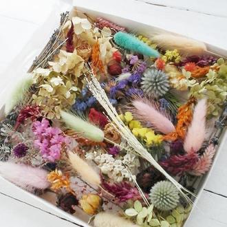 Набор сухоцветов для творчества
