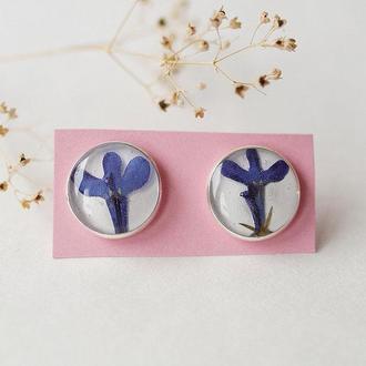 Серьги-гвоздики с цветами лопедии