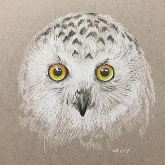 Рисунок карандашом «Полярная Сова»