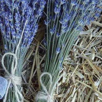Лаванда букет сухоцвет