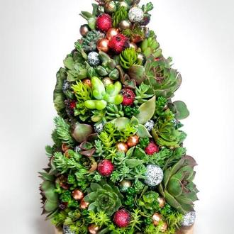 Новогодняя ёлочка из живых суккулентных растений