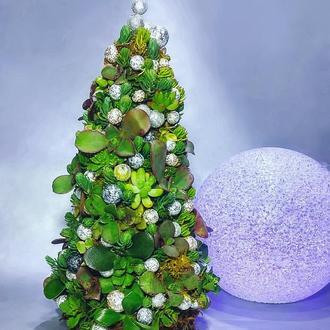 Новорічна ялинка з живих сукулентних рослин