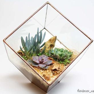 Флорариум на фото: Cub mini