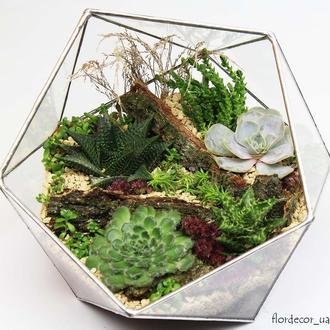 Флорариум на фото: Basket maxi
