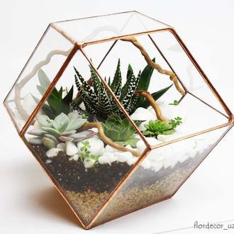 Флорариум на фото: Romber mini