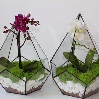 Флорариум геометрический с орхидеей