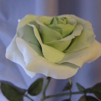 Реалистичная белая  роза
