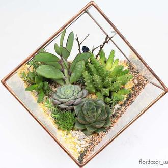 Флорариум cub mini