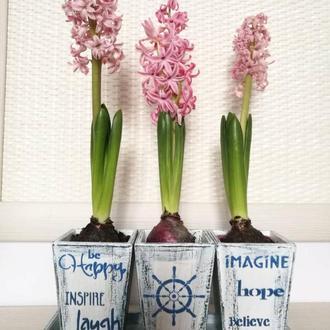 Кашпо для квітів