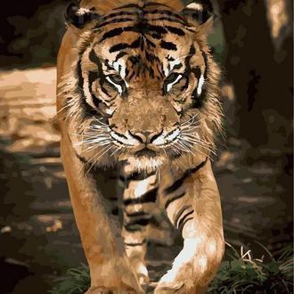 Картина по номерам 40х50 Прогулка тигра (GX21730)