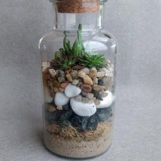Флорариум с композицией из суккулентных растений в стеклянной баночке