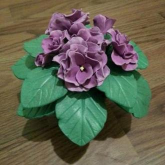 Фиалка, фиалочка, комнатное растение