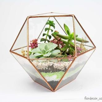 Флорариум: Super box mini