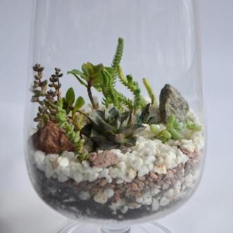 Флорариум из сукулентов в высоком бокале