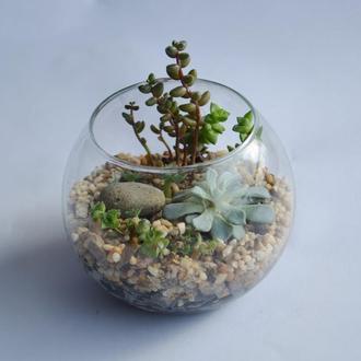 Флорариум из суккулентов в стекланом шарике