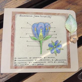 Открытка ручной работы Цветок Колокольчик