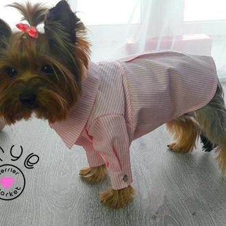 Розовая рубашка для собак