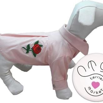 Рубашки для собак