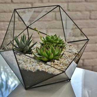 Геометрический флорариум;  флорариум с суккулентами