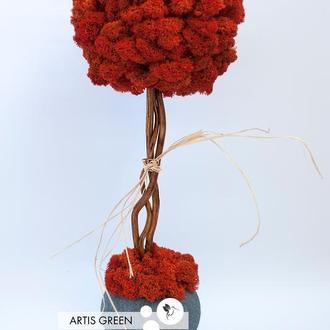 Дерево, топиарий из стабилизированного мха Red