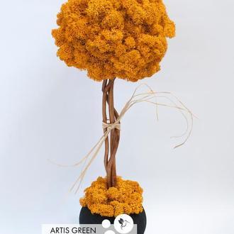 Дерево, топиарий из стабилизированного мха, Orange