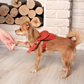 Кожаная портупея для небольших собак