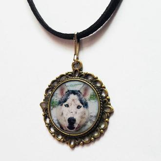 Красивый адресник для собак с фото Вашего животного