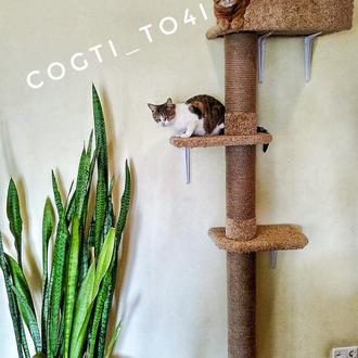Настенный Дом для кота ( подходит для больших и тяжелых) - когтеточка, дряпалка - 2018 .