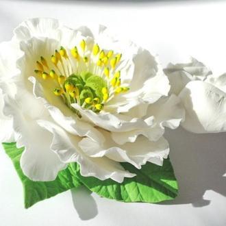 Белый Японский Пион