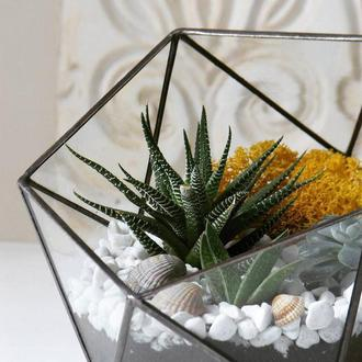 Флорариум Икосаэдр с суккулентами. Ширина - 16 см. Высота - 14 см.
