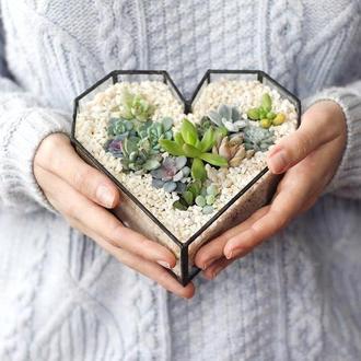 Флорариум сердце (среднее)