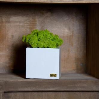 Декор Cube & Moss / white